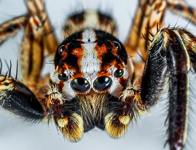 Bądź jak pająk
