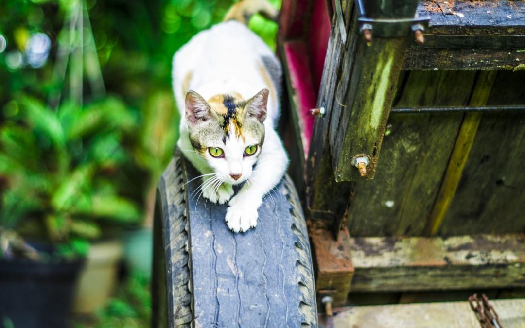 Kot łapie myszy a Ty osiągasz swoje cele?