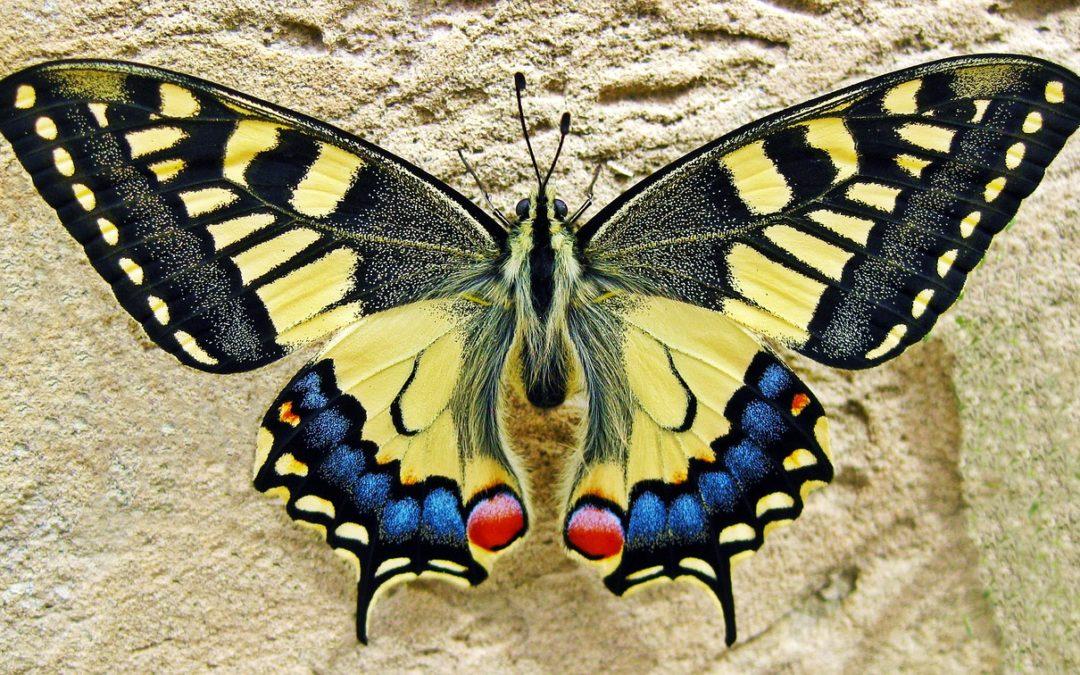Efekt motyla czyli co mogą zmienić dwa milimetry